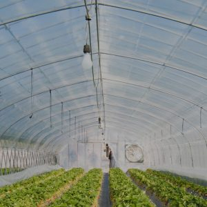 COMMERCIAL GREENHOUSE FILM