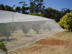 CANOPY BIRD NETTING & JAG | Product categories Bird u0026 Hail Exclusion Netting